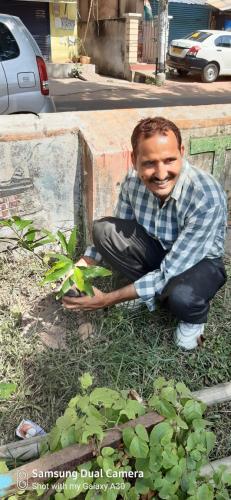 PLANTATION OF TREES
